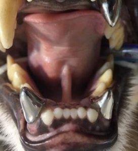 protese e restauracao e1595615794122 273x300 - Odontologia