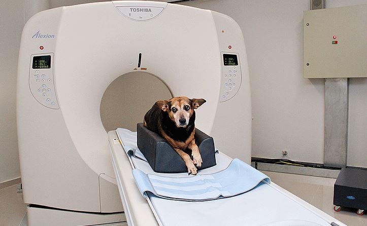 tomografia - Tomografia computadorizada ajudando seu pet